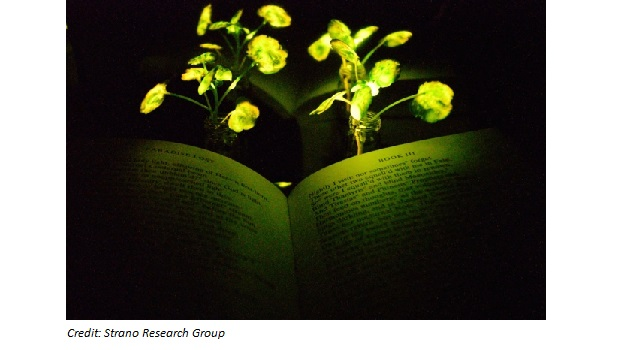 Using Plants to Produce Light