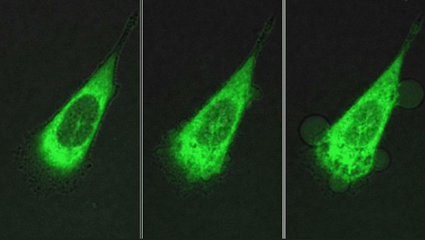 Nanomachines drill holes into cancer cells